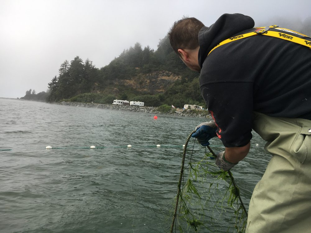 """Jerome Nick Jr. of the Yurok Tribal Fisheries Department checks a net set a couple hours earlier. """"No fish."""" (Lisa Morehouse/KQED)"""
