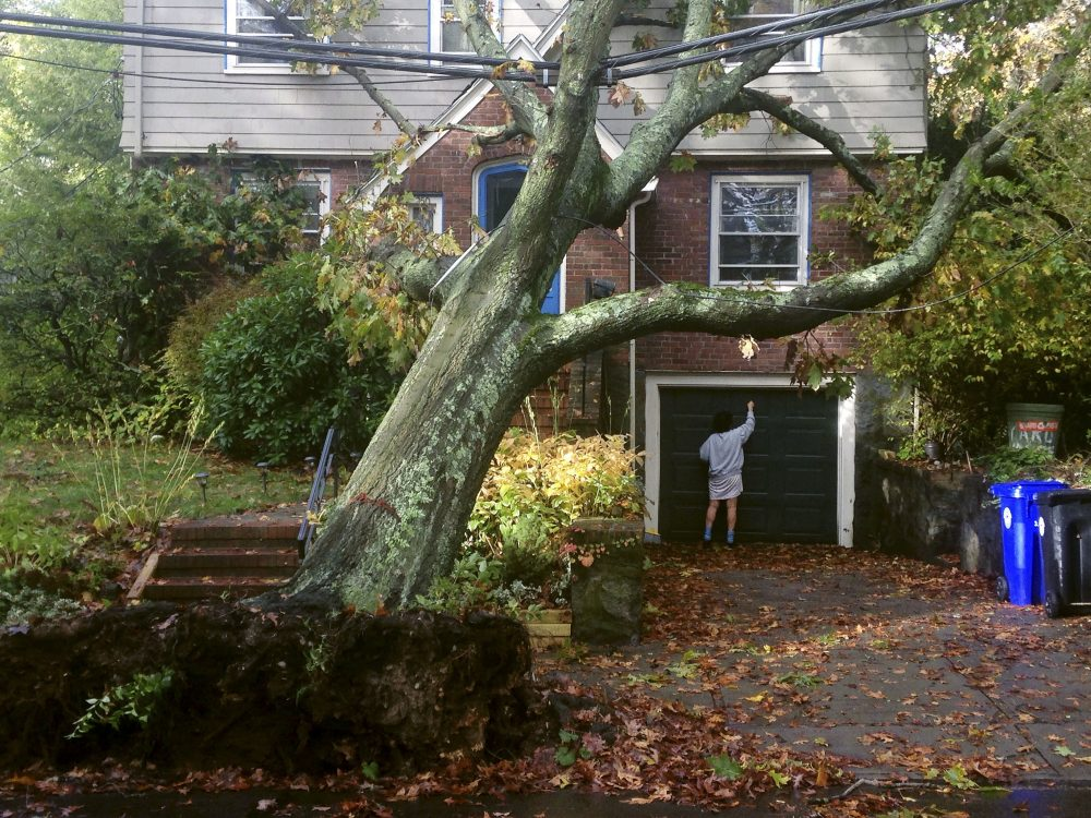 A toppled tree leans onto a power line after an overnight storm Monday in Brookline, Mass. (Alanna Durkin Richer/AP)