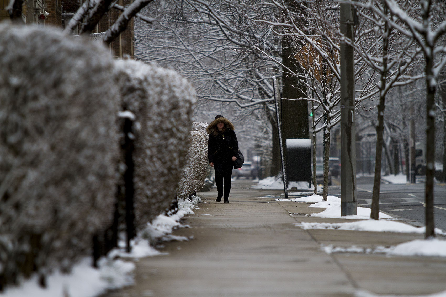 A woman walks down St. Paul Street in Brookline during snowfall on March 10, 2016. (Jesse Costa/WBUR)