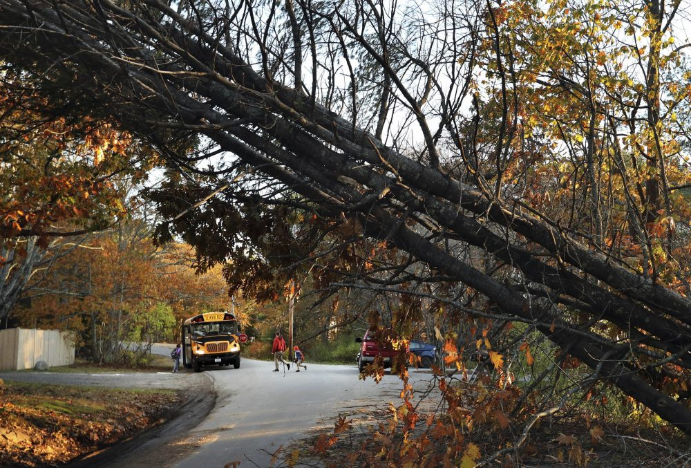 A father walks his child to a school bus at a temporary pick up location, Wednesday, Nov. 1, 2017, in Freeport, Maine, where storm-toppled trees still made several roads impassable following Monday's storm. Drought conditions across much of Maine may have contributed to the large numbers of trees that toppled during a storm that walloped the Northeast this week, officials said. (AP Photo/Robert F. Bukaty)