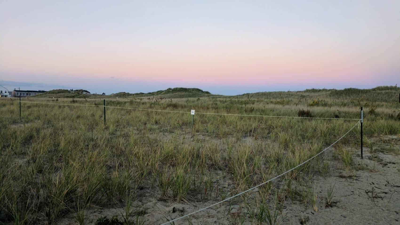At Hampton Beach State Park, a community garden allows any coastal homeowner to take beach grass for free. (Jason Moon/NHPR)