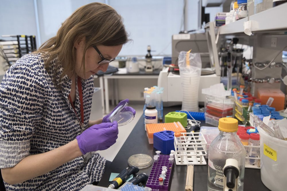 A new initiative is trying to support women in the Massachusetts biotech industry by funding and mentoring early-stage companies led by women. Pictured: A post doctoral student working at a lab in the Alexandria Center for Life Sciences in New York (Mary Altaffer/AP Photo)