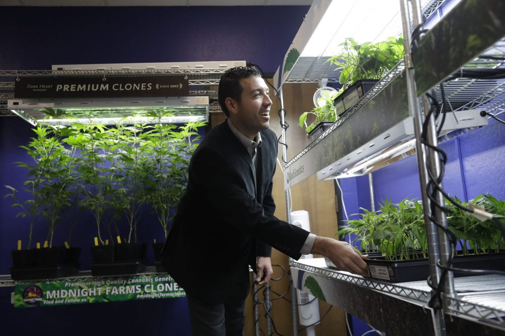 In this Dec. 29, 2017, photo, Khalil Moutawakkil, co-founder and CEO of KindPeoples, a marijuana dispensary, looks at different marijuana plants on display in his store in Santa Cruz, Calif. Californians may awake on New Year's Day to a stronger-than-normal whiff of marijuana as America's cannabis king lights up to celebrate the state's first legal retail pot sales. (Marcio Jose Sanchez/AP)