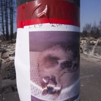 A lost cat poster is taped to a light pole in the fire-devastated Coffey Park neighborhood on Oct. 14, 2017 in Santa Rosa, Calif. (David McNew/Getty Images)