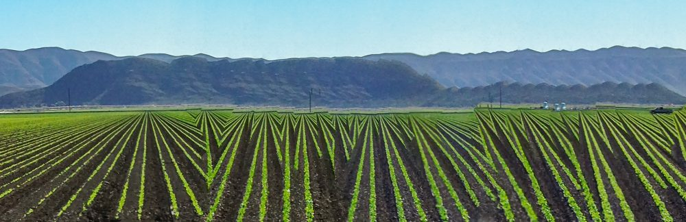 The vegetable fields in Camarillo, California, in 2014. (Courtesy Rosamond and Dennis Purcell)