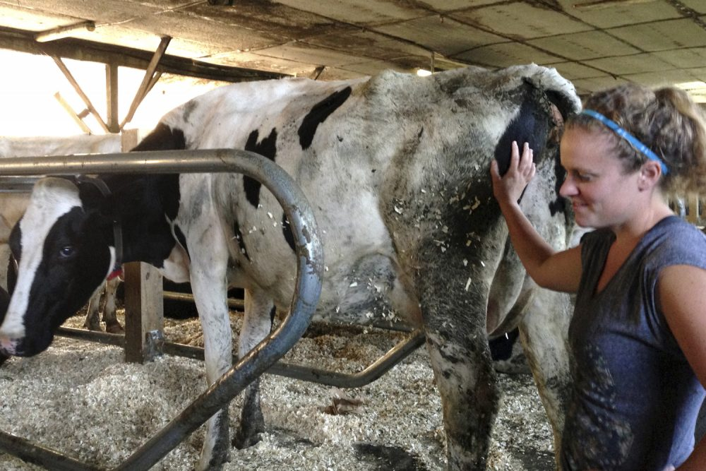 In this 2015 photo, a dairy farmer works with cows at her family farm in Graniteville, Vt. (Lisa Rathke/AP)