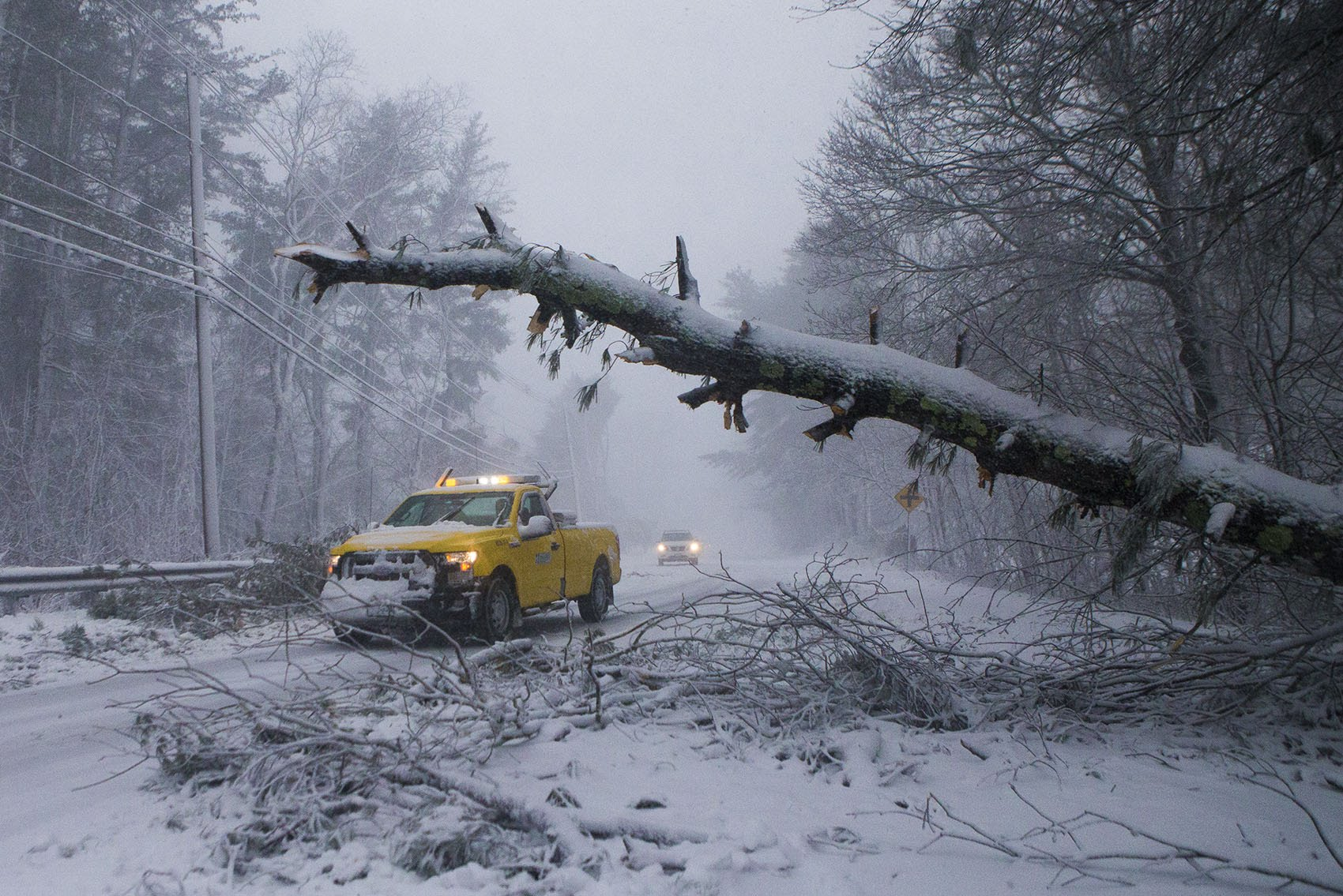 A MassDOT worker arrives where a tree had fallen across Route 53 in Pembroke. (Jesse Costa/WBUR)
