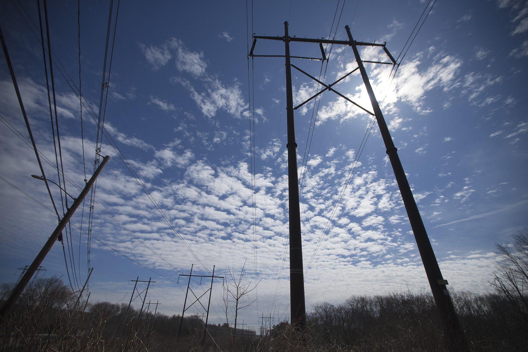 Powerlines in Medway (Jesse Costa/WBUR)