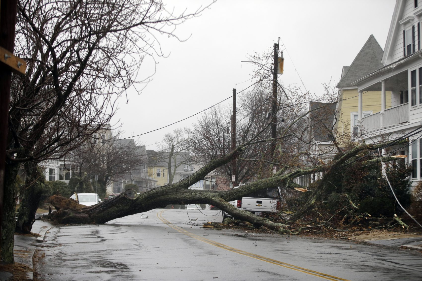 An uprooted tree blocks a residential street on Friday after taking down a power line in Swampscott. (Elise Amendola/AP)
