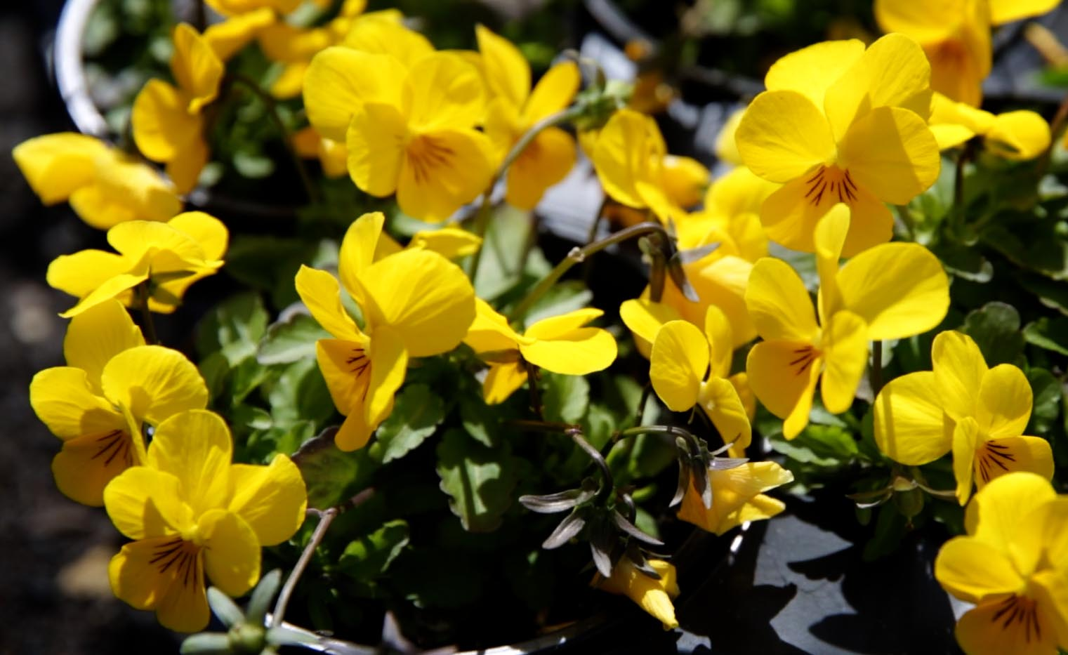 Here Are The Blooming Flowers To Plant In Your Garden This Spring