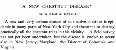 The start of William Murrill's article in Torreya, a botanical journal, describing Chestnut blight. He was the first to do so. June, 1906.