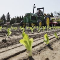 In this April 26, 2018, photo, workers plant romaine lettuce at the EG Richter Family Farm in Puyallup, Wash. (Ted S. Warren/AP)
