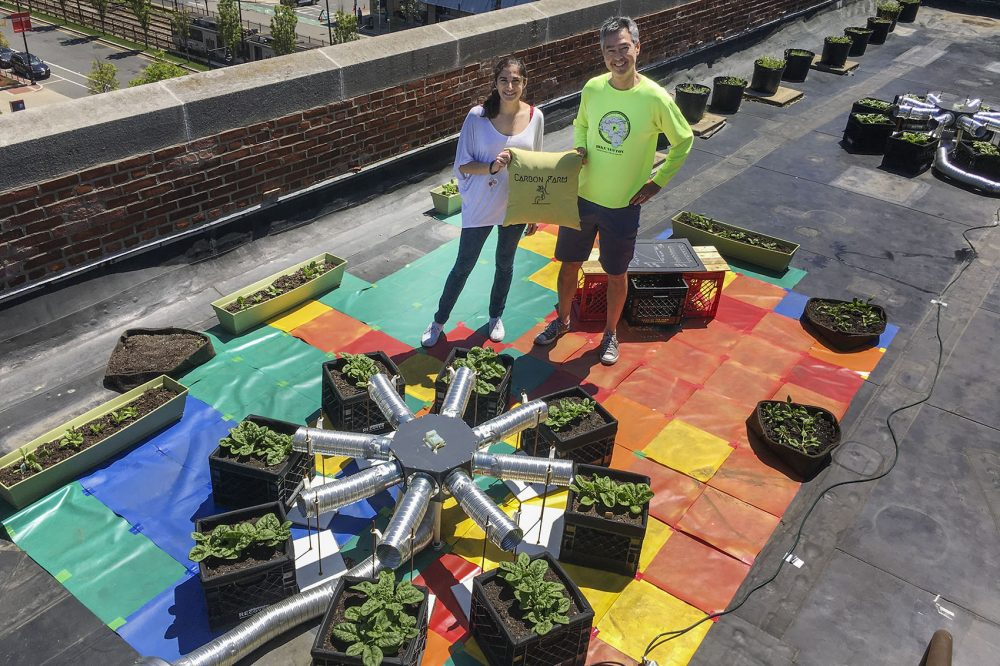 "Ph.D. candidate Sarabeth Buckley and her adviser, Nathan Phillips, professor of earth and environment at Boston University, stand with a ""carbon farm"" atop a BU building, with spinach plants ready to be harvested. (Bruce Gellerman/WBUR)"