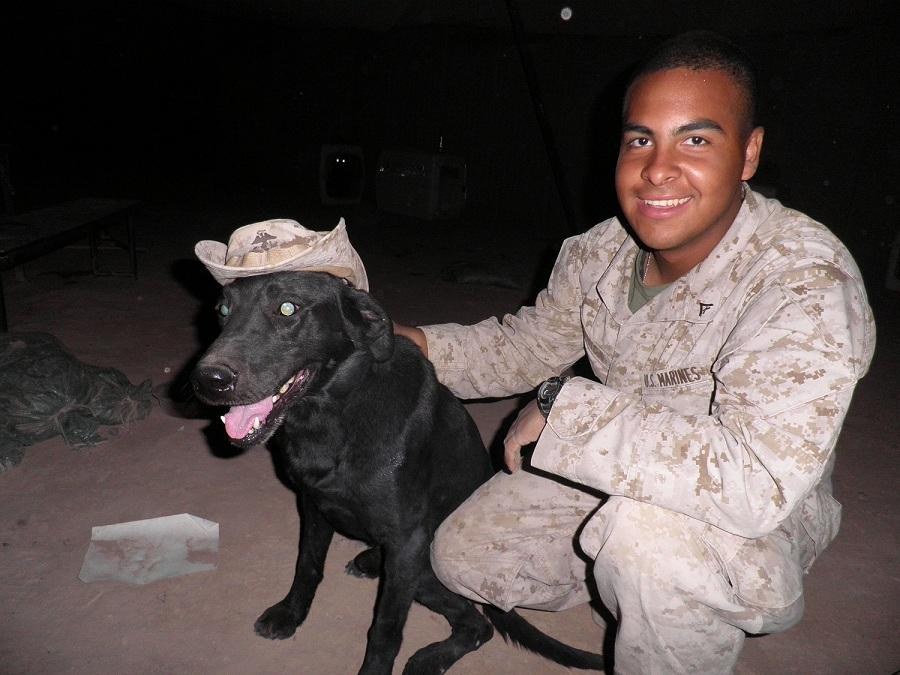 Taker, who served as an explosives detection dog with the Marine Corps. (Courtesy American Humane)