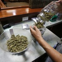 In 2016, an employee places marijuana for sale into containers at The Station, a retail and medical cannabis dispensary in Boulder, Colorado. (Brennan Linsley/AP)