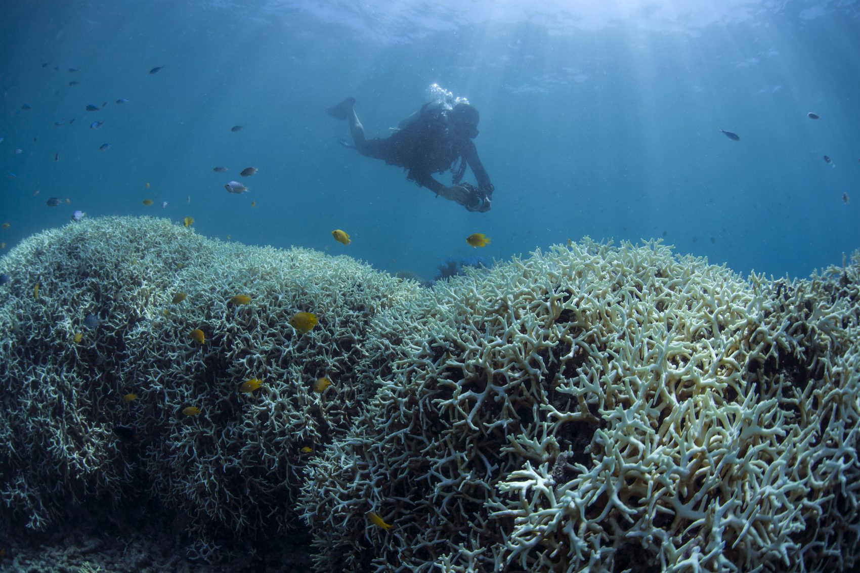 Great Barrier Reef Bleaching Has Been Devastating  But -3595