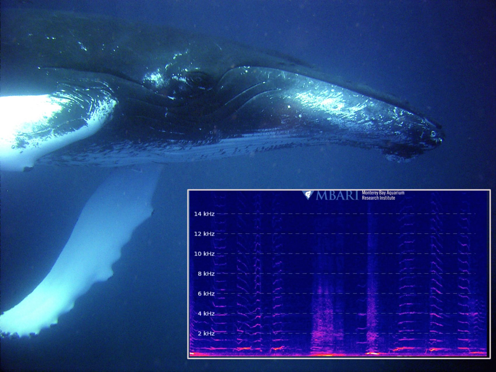 you can now listen to a livestream of whale sounds 24 7 here now