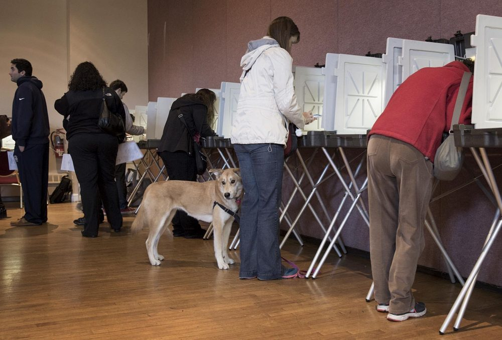 A dog waits by the voting booths at the Hellenic Cultural Center, Watertown, Mass. in 2016 (Robin Lubbock/WBUR)