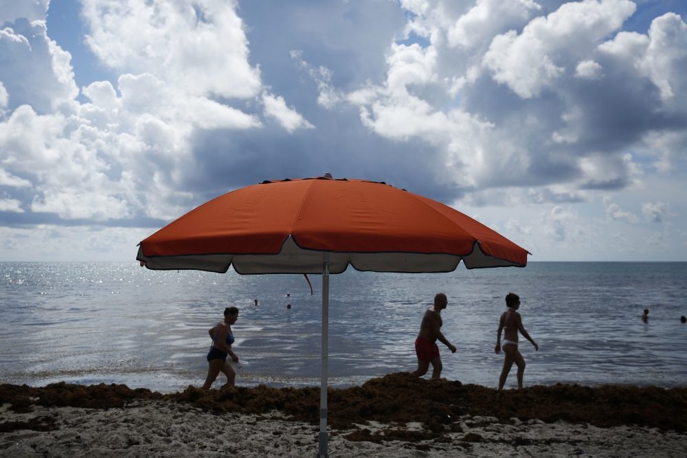 Beachgoers pick their way past seaweed on Wednesday, July 11, 2018, in Sunny Isles Beach, Fla. (Brynn Anderson/AP)