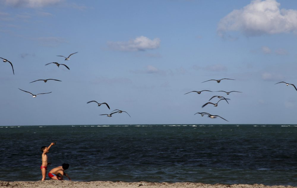 Children play along the shore at Crandon Park in Miami. (CX Matiash/AP)