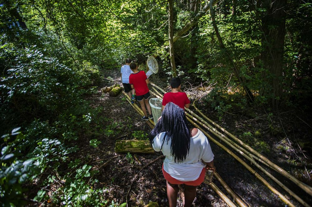Campers from the Mashpee Wampanoag tribe search for bugs in the cedar swamp. (Jesse Costa/WBUR)