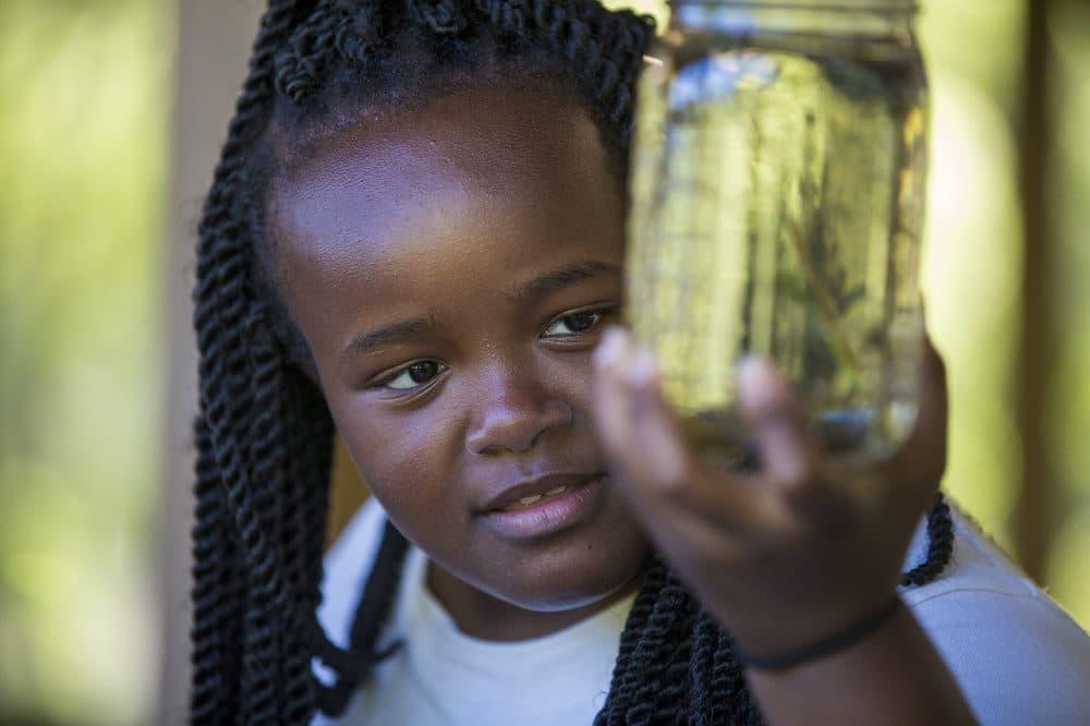 Camper Dorothea Phillips, 14, looks at a leech in a mason jar. (Jesse Costa/WBUR)