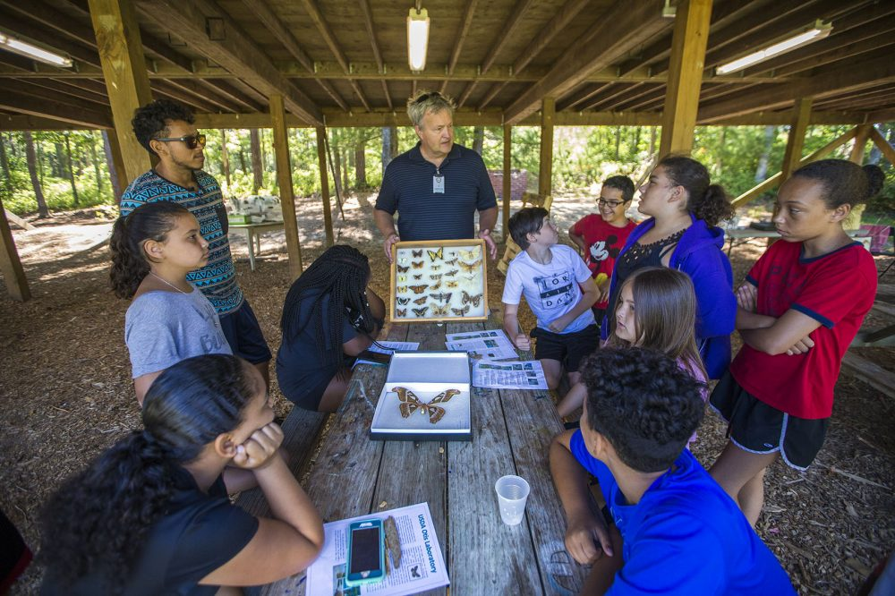 Ron Mack fields questions from campers of the Mashpee Wampanoag science camp while he presents cases filled with different types of butterflies. (Jesse Costa/WBUR)