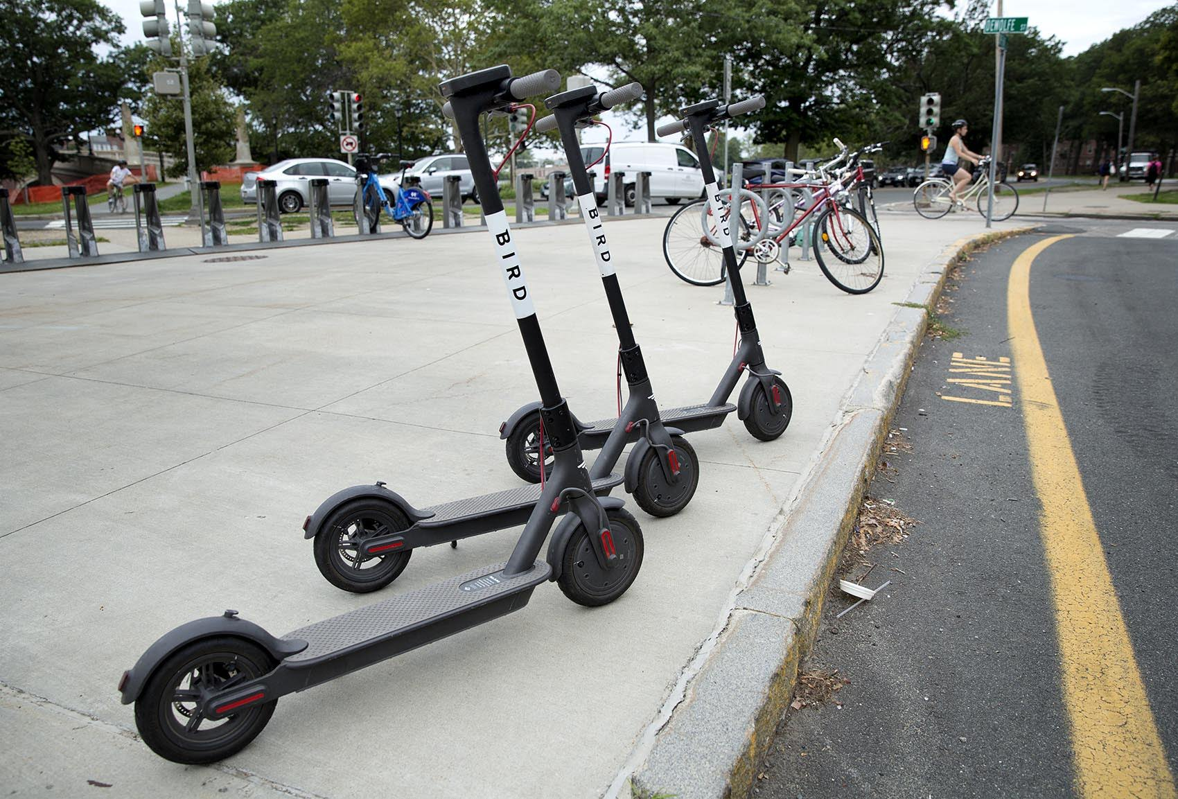 Bird Refuses To Back Down As Somerville Seizes Electric Scooters