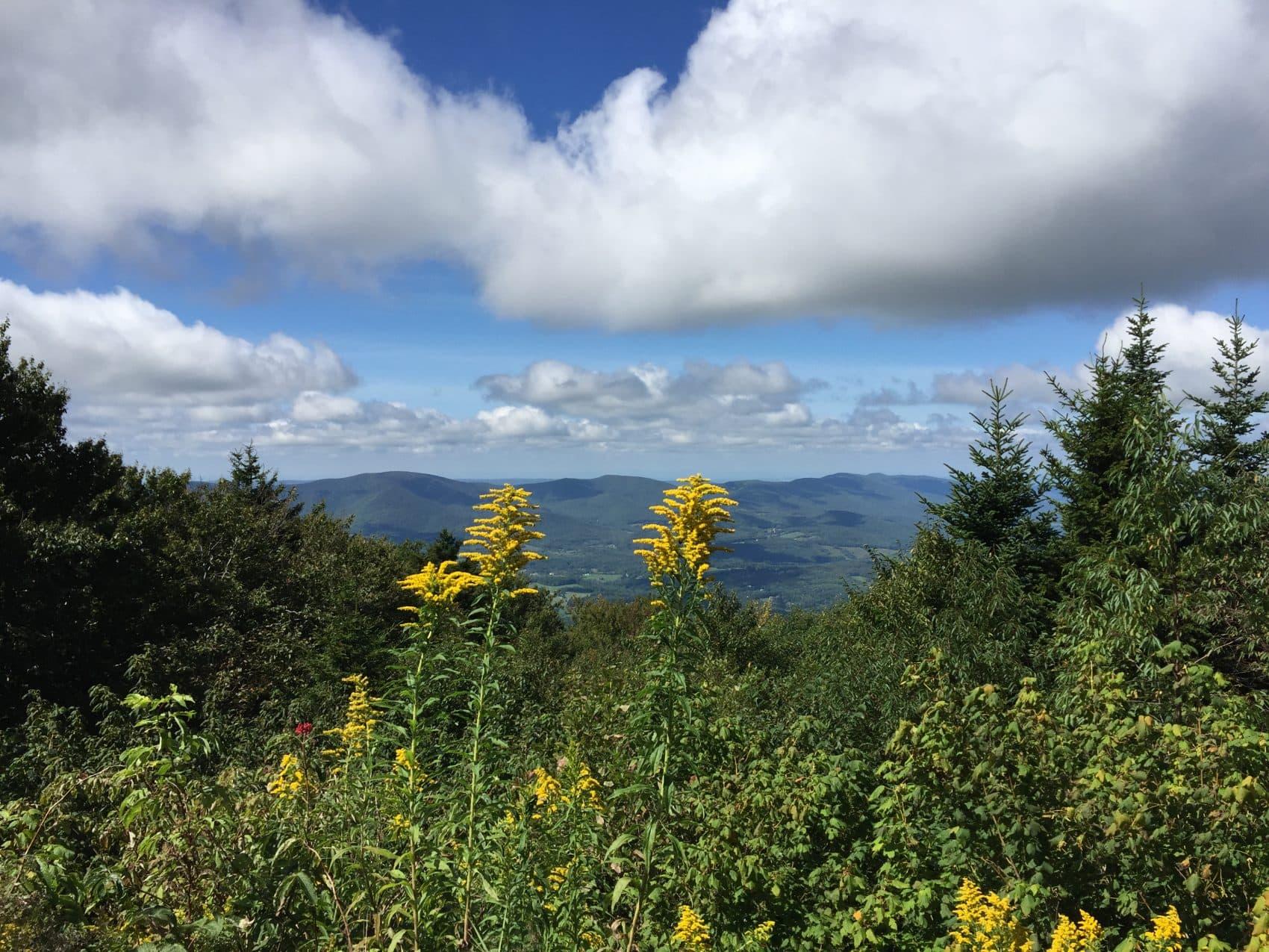 The view from Mount Greylock, the highest peak in the Berkshires. (Beth J. Harpaz/AP)