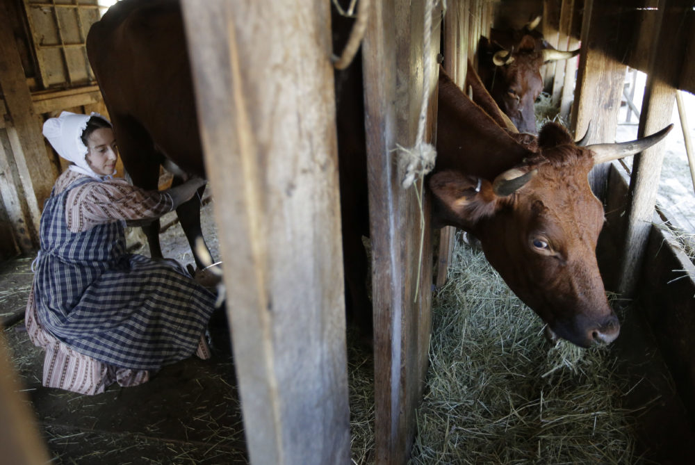 Ellen Watterson reenacts an 1830s farm worker milking a cow named May in a barn at Old Sturbridge Village. (Steven Senne/AP)