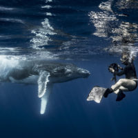"""Photographer Annie Crawley takes a photo of a baby humpback whale for the Landmarks Orchestra """"Sounds of the Sea"""" performance. (Courtesy Annie Crawley)"""