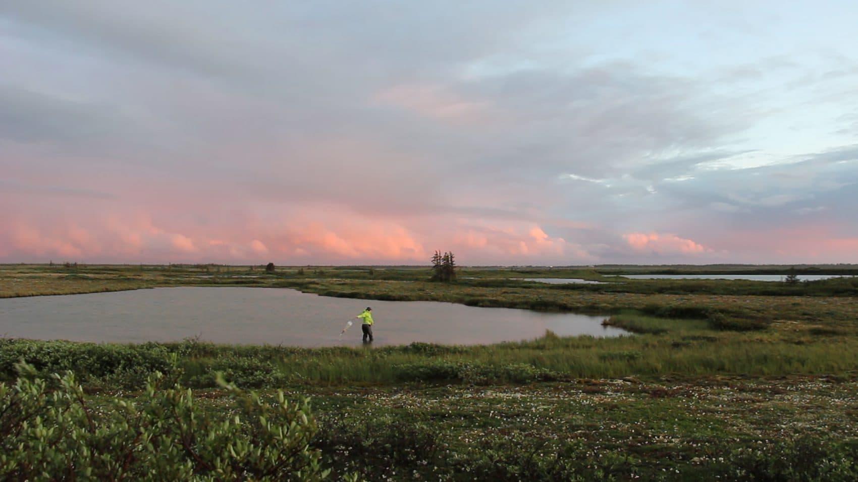 A researcher collects Daphnia samples in Manitoba. (Courtesy Allison Maria Rodriguez)