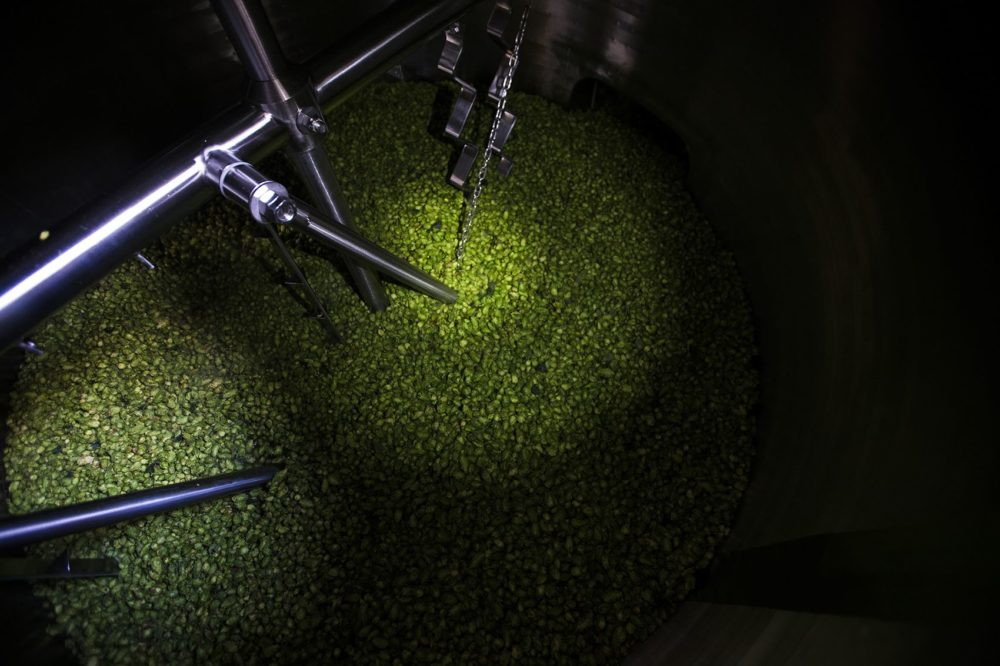 Hops in the brewing tank at Lamplighter where they'll steep in wort. (Jesse Costa/WBUR)
