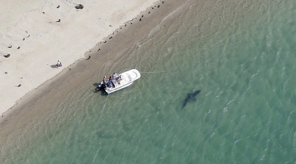 After Fatal Shark Attacks, Some Complain Of Slow Response