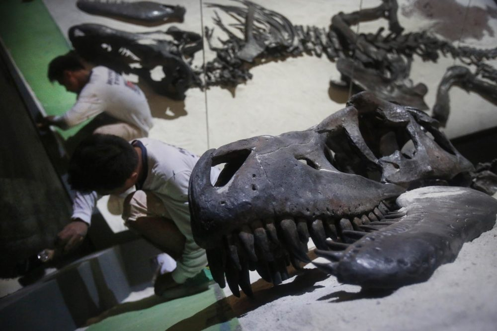 "In this Tuesday, Jan. 21, 2014 photo, workers putt on the final touches around the exhibit of a Tarbosaurus bataar found in Mongolia, in preparations for an exhibition titled ""Dinosaurs: Dawn to Extinction"" at the Art Science Museum, in Singapore. The exhibition takes visitors back more than 600 million years back in time to a world of terrestrial reptiles. (AP Photo/Wong Maye-E)"