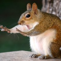 "A squirrel saying, ""Stop!"" (Mary McGowan/Courtesy of the Comedy Wildlife Photography Awards)"