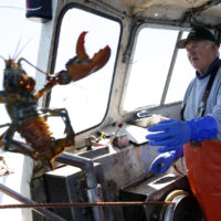 In this April 27, 2016 photo, Richard Sawyer, Jr., left, tosses back an undersized lobster who fishing on Long Island Sound off Groton, Conn. Sawyer, a third-generation lobsterman, fears there won't be enough lobster for his sons and grandsons to work as fishermen. (AP Photo/Robert F. Bukaty)