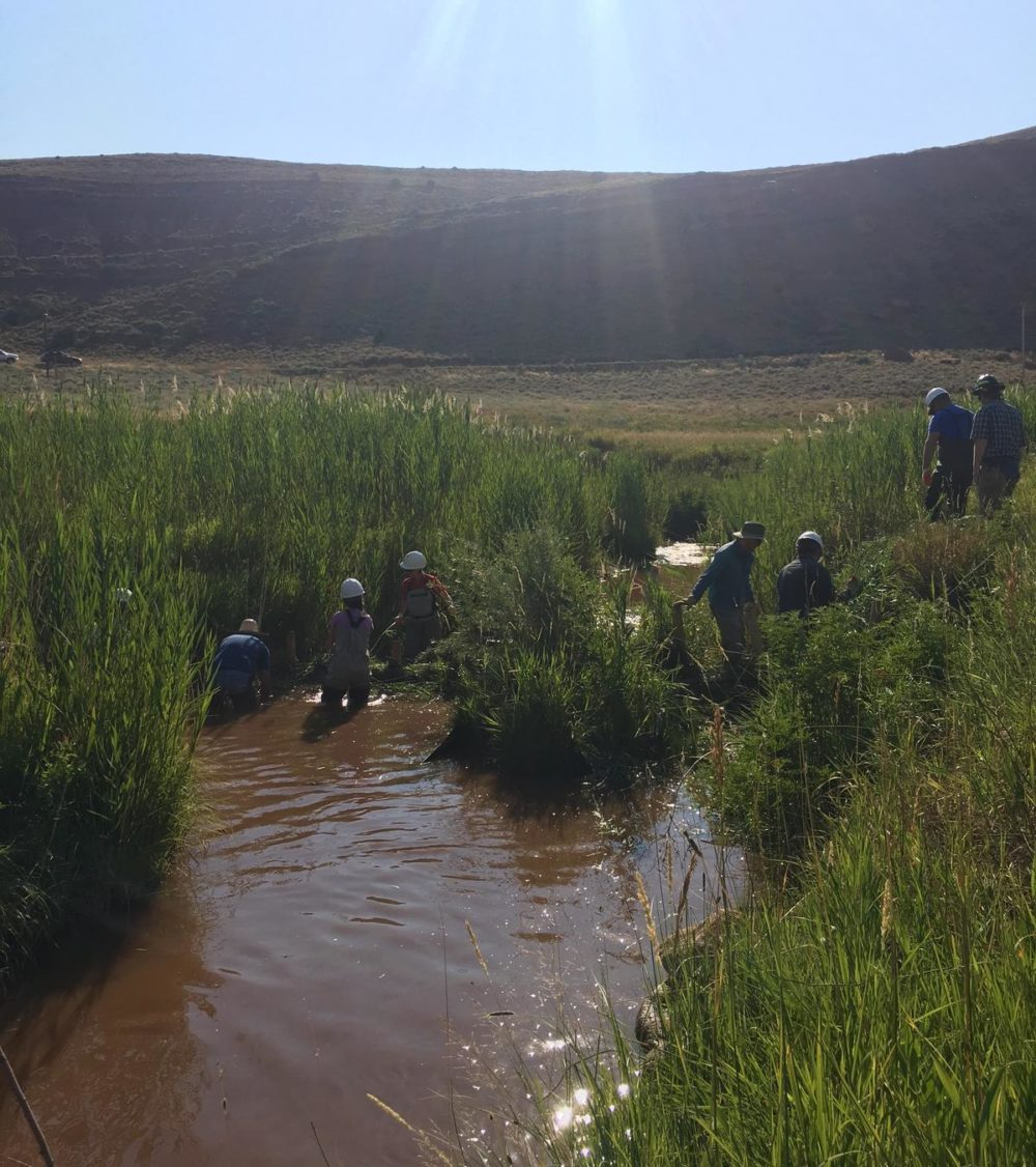 Conservationists and biologists taking a cue from the beaver's playbook while making a dam that acts like the rodent's habitat. (Maggie Mullen/Mountain West News Bureau)