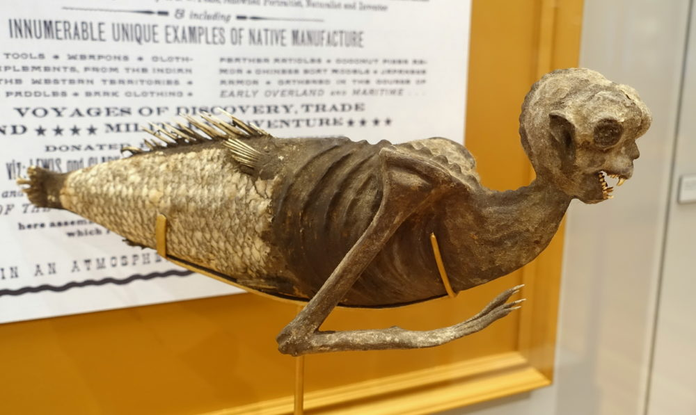 "A ""Fiji mermaid,"" displayed in Harvard University's Peabody Museum of Archaeology and Ethnology. (Daderot/Wikimedia Commons)"