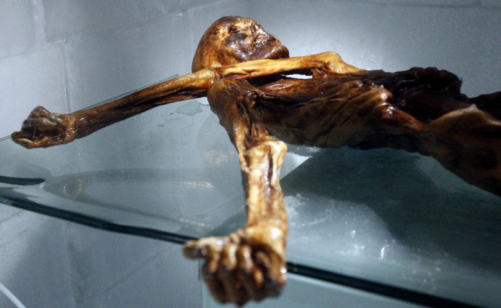 The mummy of an iceman named Oetzi, discovered in 1991 in the Italian Schnal Valley glacier, is displayed at the Archaeological Museum of Bolzano on February 28, 2011 during an official presentation of the reconstruction. (Andrea Solero/AFP/Getty Images)