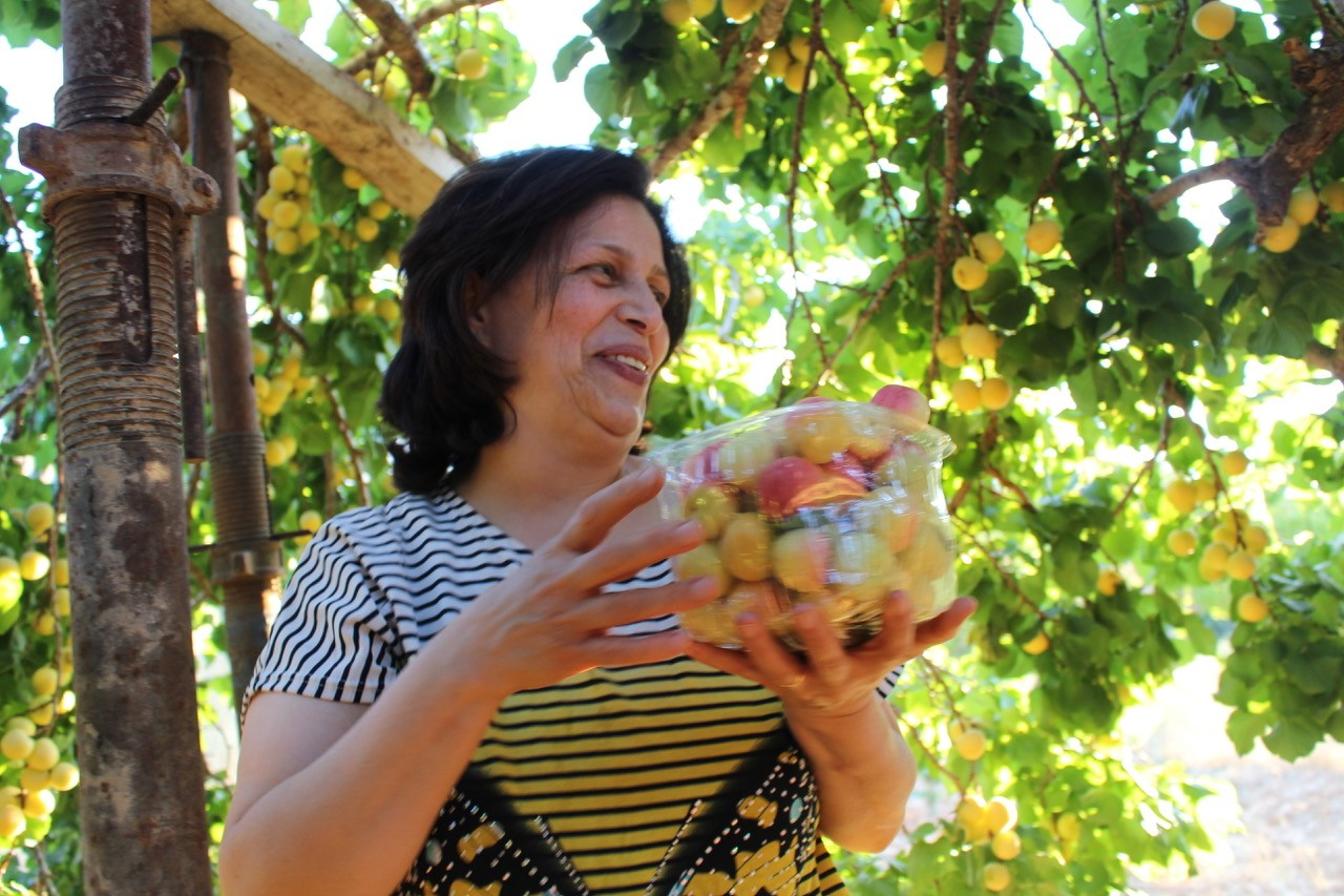 The author's friend, Afaf, picking apricots in the village of Al-Walaja near Bethlehem. (Courtesy of the author)