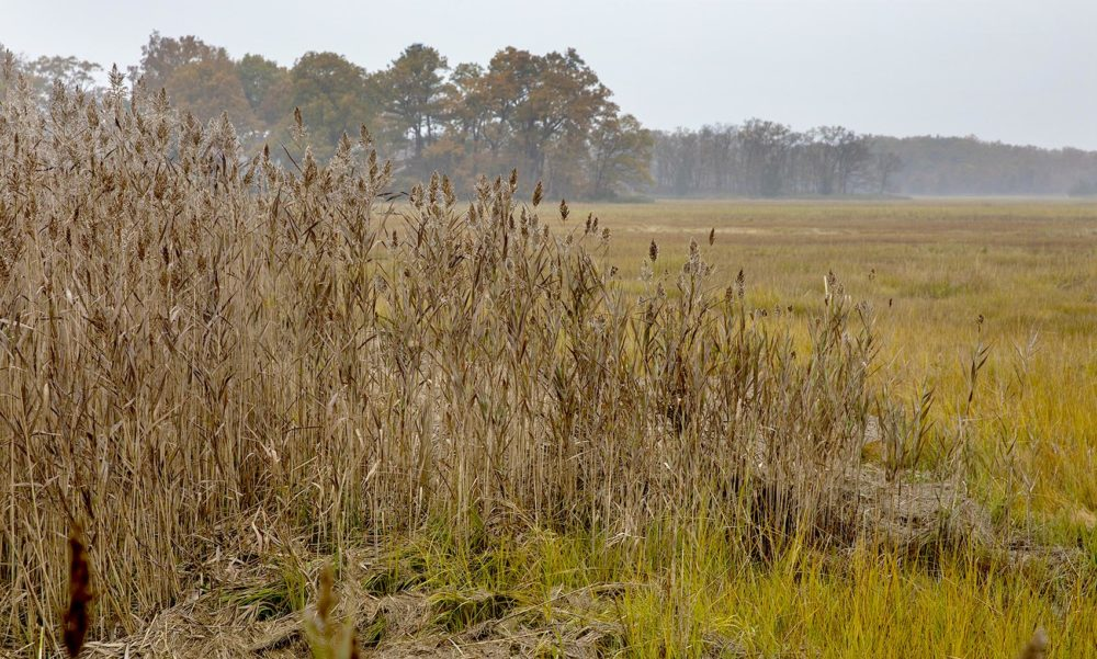 Fall colors in the marshes around Plum Island Sound (Robin Lubbock/WBUR)