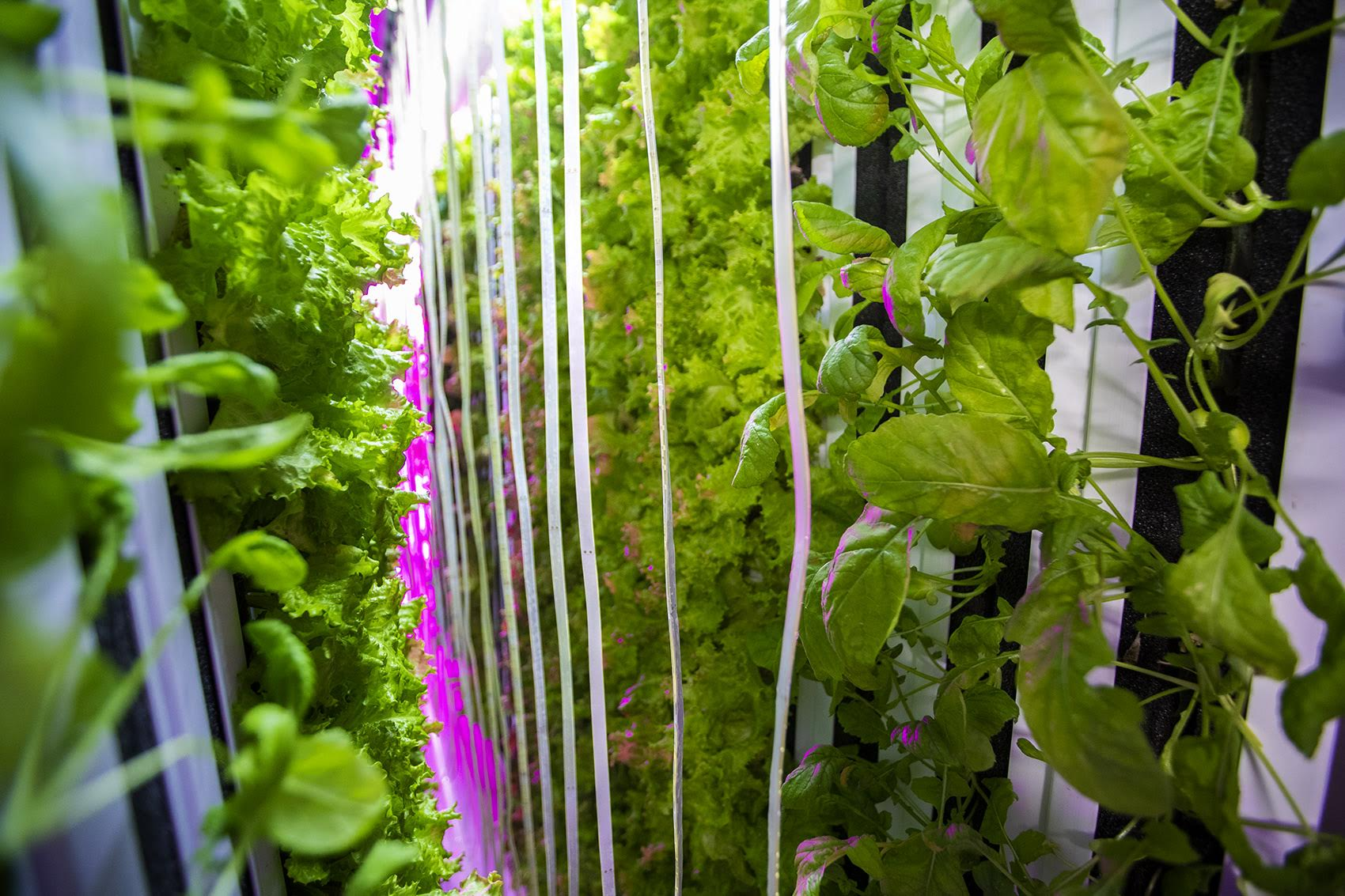 Investments In AgTech Are Growing Fast  What's Got Investors