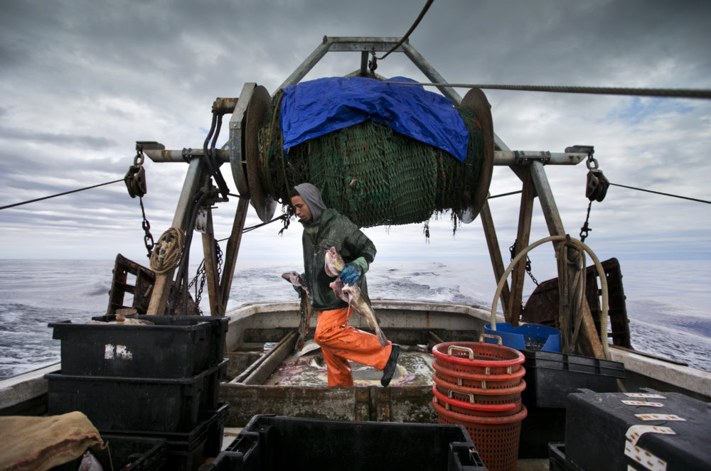 In this 2016 file photo, Elijah Voge-Meyers carries cod caught in the nets of a trawler off the coast of New Hampshire. (Robert F. Bukaty/AP)