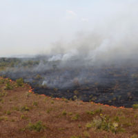 """In this Aug. 25, 2016 photo released by Ibama, the Brazilian Environmental and Renewable Natural Resources Institute, a forest fire burns in Xingu Indigenous Park in Mato Grosso in Brazil's Amazon basin. The """"tipping point for the Amazon system"""" is 20 to 25 percent deforestation, according to Carlos Nobre and Thomas Lovejoy, environmental scientists at George Mason University. (Vinicius Mendonca/Ibama via AP)"""