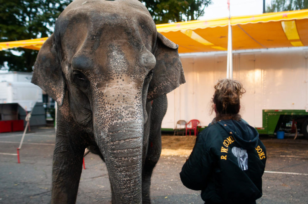 A Commerford employee stands next to the elephant Minnie at the Big E in October. (Ben James/NEPR)