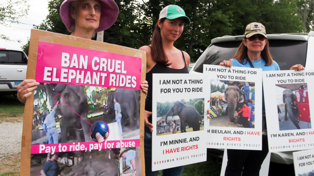 Connecticut residents Jill Alibrandi of Redding, Michelle Catino of Stamford and Lea Haut of Bridgeport protest the elephant rides at the Goshen Fair. (Ben James/NEPR)