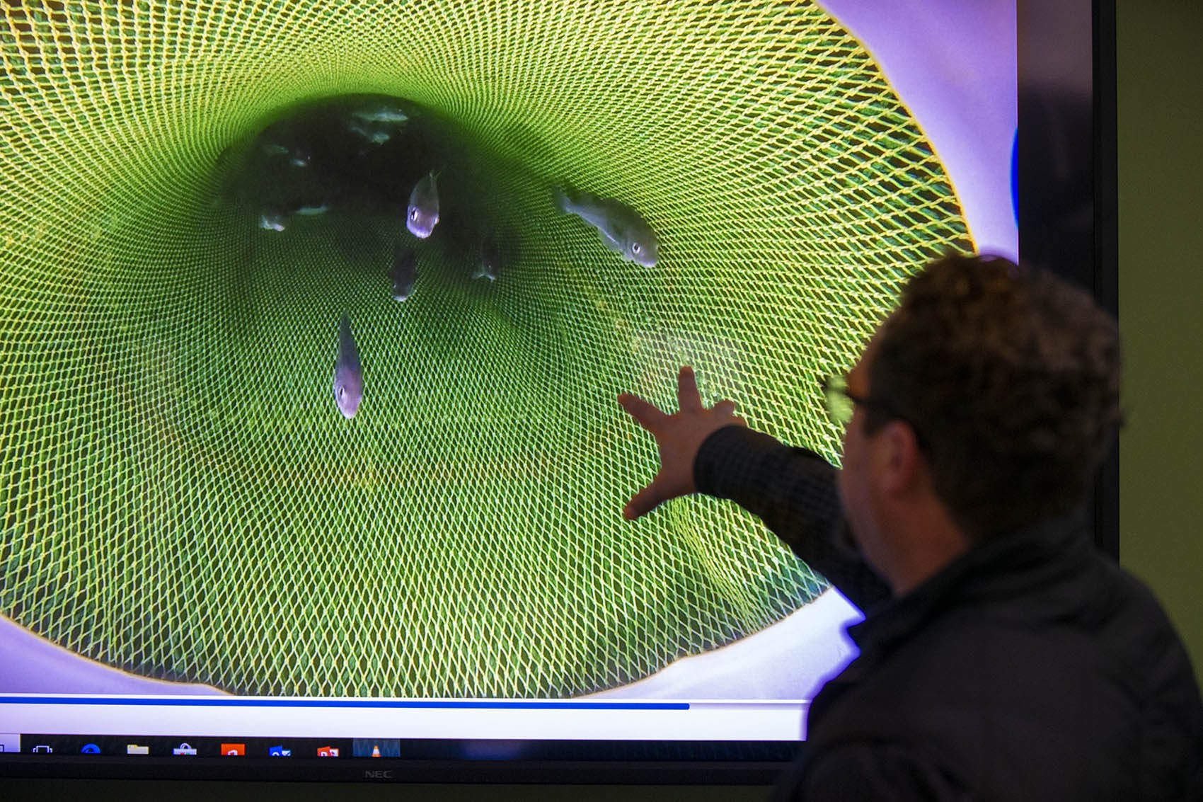 Spherical Analytics CBO Chris Rezendes points at a large screen with a video of cod fish passing through a fishing net at the UMass Dartmouth Oceanography Operations Lab at the Mass. Division of Marine Fisheries. (Jesse Costa/WBUR)