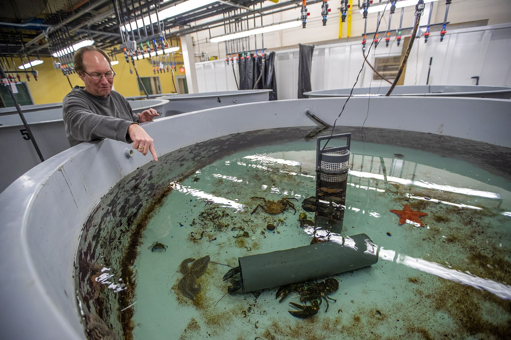 Lead researcher Kevin Stokesbury points at shellfish in a tank at a testing facility at the UMass Dartmouth Oceanography Operations Lab at the Mass. Division of Marine Fisheries. (Jesse Costa/WBUR)