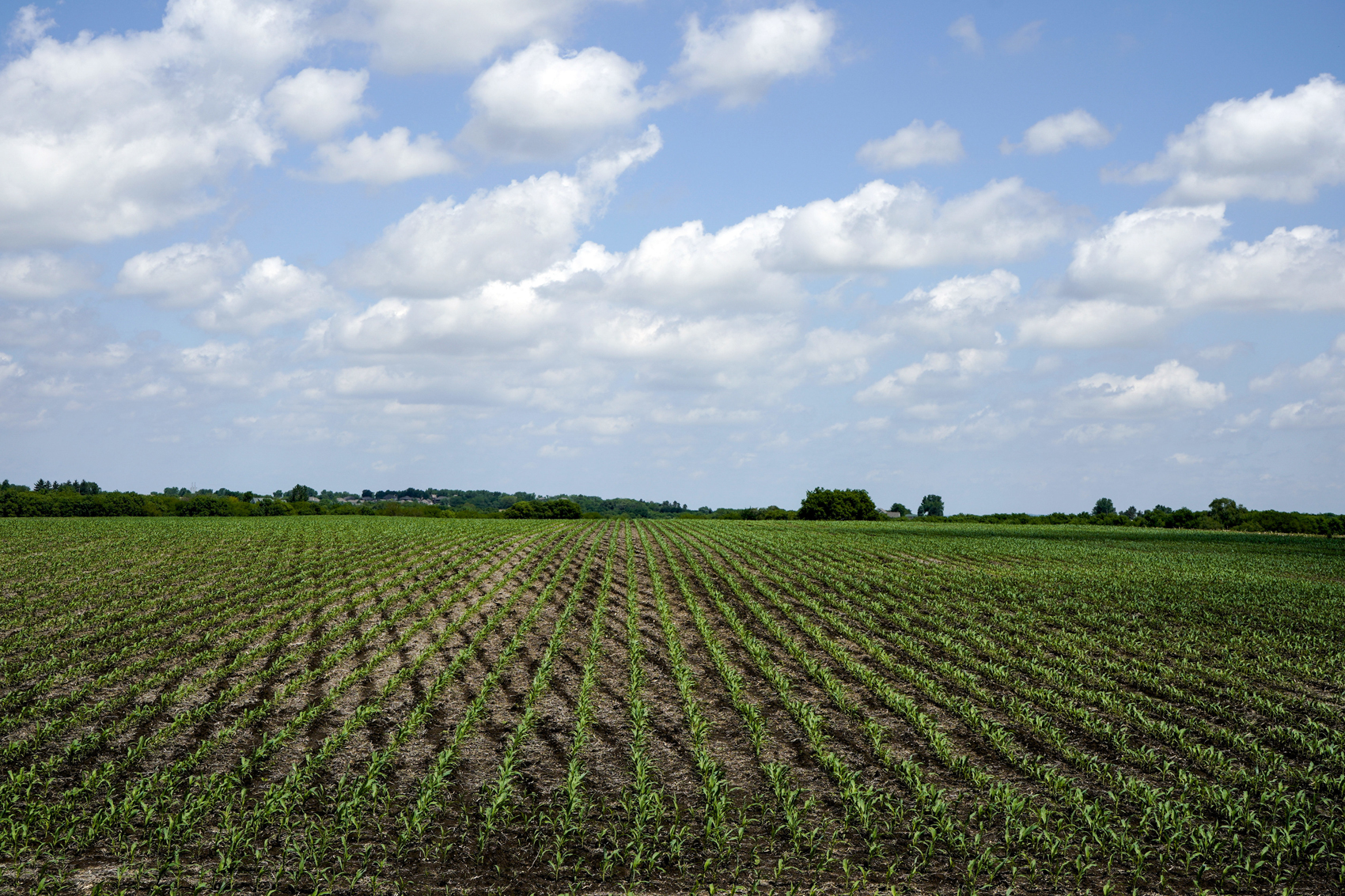 Inside The Farm Bill: Subsidies For Farmers, Boost For Hemp And More